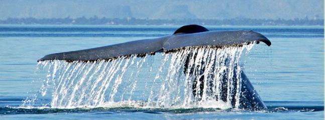 Whale Watching at Magdelana Bay