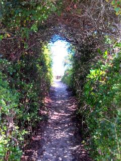 Beach access tunnel of live oaks