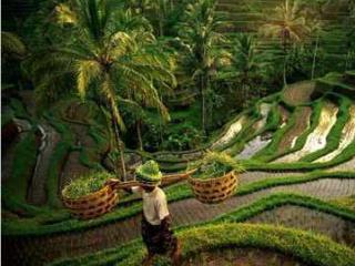 Charming Home in Lush Tropical Setting, Ubud, Bali