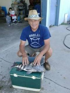 Mr. Mills with sheepshead caught off the dock