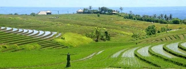 The property is surrounded by Ocean and Rice fields