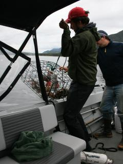 Pulling up the crab