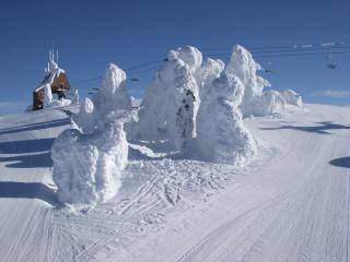 Snow ghosts on the mountain.