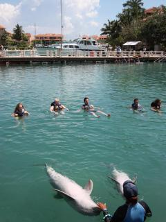 Fun dolphin shows 4 times a day!