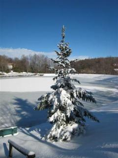 Tree at Coffey Lake after snow fall, near house