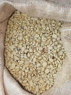 Coffee Parchment dried on our farm