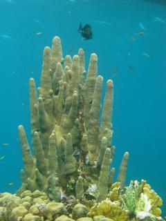 Pillar Coral Dive Site