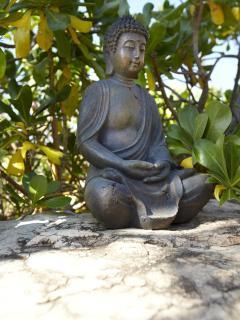 Budha at the pond