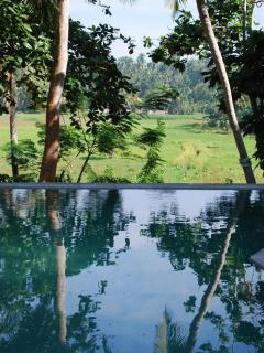 pool with infinity view over rice paddies