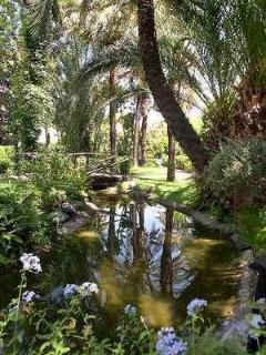 River in the subtropical garden