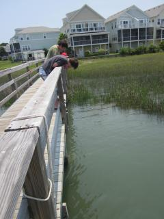 Try crabbing off Water's Edge dock