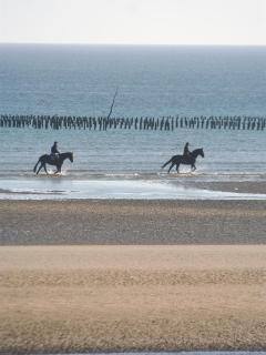 horses on the beach with mussel farms behind © Mike Forster