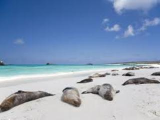 Galapagos, we will help to find a good deal for you