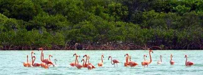 Flamingos are our national bird...