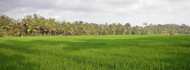 West view over the rice fields