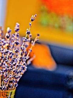 Lavender in the house from our friend's lavender farm in Tennessee.