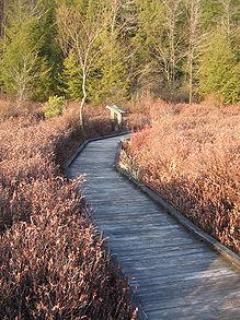 Black Moshannon Bog Boardwalk