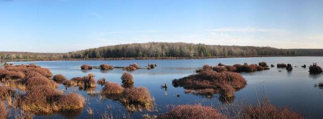 Panoramic Photo of Black Moshannon State Park