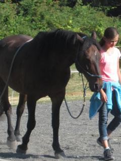 Walking in Harmony - horse lessons for kids of all ages