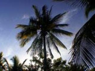 Don't sit under the coconut tree, no joke..