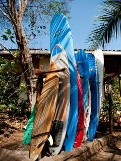 Surfboard rental and classes (we also rent kayas, snorkel gears, and horses)