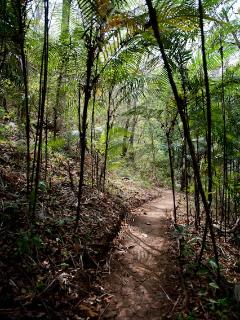 Ecovenao Trails