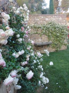 roses at villa il Santo