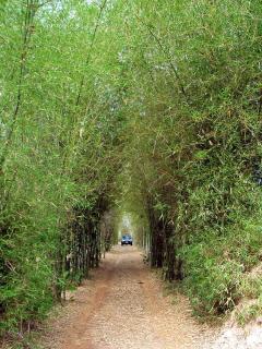 Bamboo drive entrance