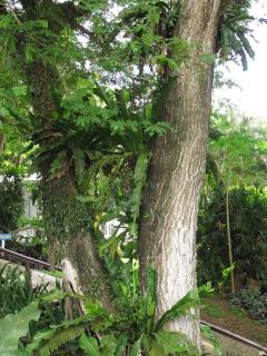 Tropical trees at edge of deck