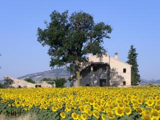 Special B&B in great location for exploring Marche, Treia