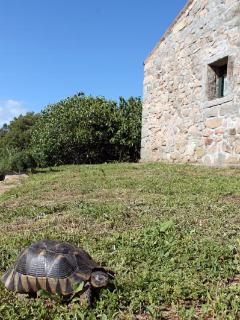 A turtle in the garden