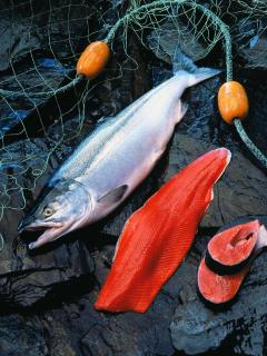 Fresh Sockey Salmon available for sale during the summer months.