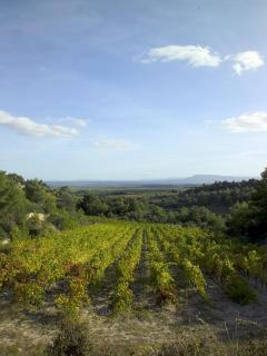 Characteristic vineyard scenery
