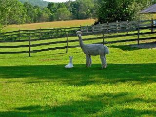 Nearby Alpaca Farm