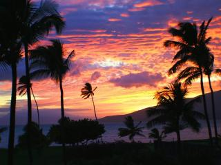Beautiful Ocean Front/View 2 bedroom condo resort, Kihei