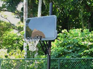 ... and shoot a few hoops!    Snorkels, racquets and balls are complimentary.