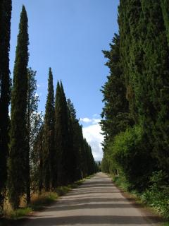 Cypress avenue in front of villa
