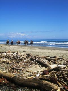 Here we have great horse tours on the beaches