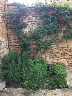 Courtyard roses