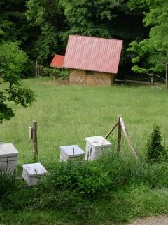 Beehives and Cow Barn