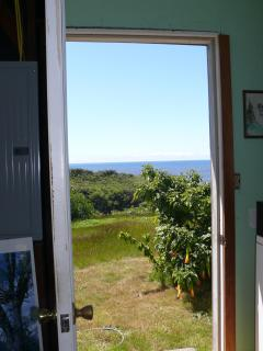 view from laundry room / back door