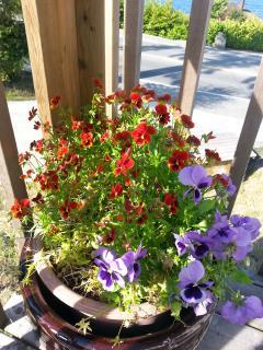 Flower baskets brighten up the yard