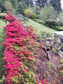 Azaleas in the lovely gardens