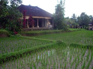 Quiet and peaceful 1 bedroom House in Ubud.