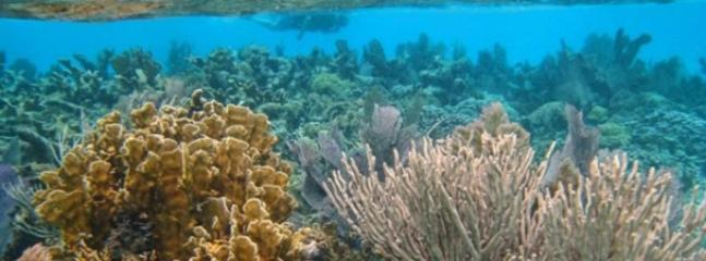 The second largest barrier reef in the world is right here!