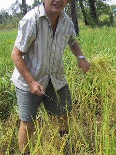 Your host Jeremy helping with the rice harvest