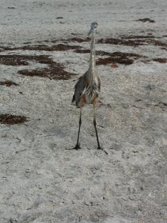 Beach Wildlife