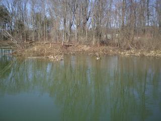 Pendergast Creek... nur wenige Schritte entfernt