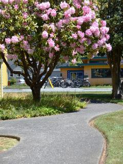 Gateway Stay Walkway from Rear Off-Street Parking Area, Rhodie in Bloom