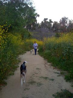 Elysian Park in the Spring-time
